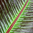 Red Banana Leaf Detail — Stock Photo