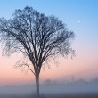 Dawn, Bare Trees and Crescent Moon — Stock Photo