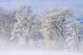 Frosted Trees in Fog — Stock Photo