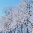 Winter Landscape of Frosted Trees — Stock Photo