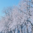 Winter Landscape of Frosted Trees — Stock fotografie