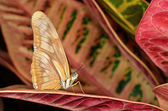Julia Longwing Butterfly — Stock Photo