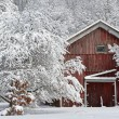 Winter Forest and Red Barn — Stock Photo #42903331