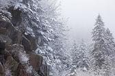 Snow Flocked Trees — Stock Photo
