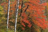 Floresta de outono — Fotografia Stock