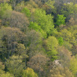 Spring Forest Blue Ridge Parkway — Stock Photo #47141039