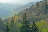 Spring, Great Smoky Mountains — Stock Photo