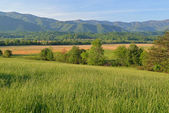 Spring, Cades Cove, Great Smoky Mountains National Park — Stock Photo