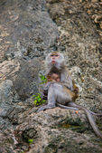 Monkey mother and son — Stock Photo