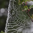 Spiderweb — Stock Photo #12353986