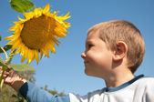Boy with sunflower — Stock Photo