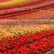 Foto Stock: Flower Field