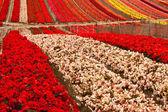 Květinové pole — Stock fotografie