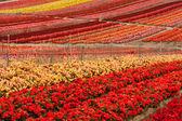 Blomma fältet — Stockfoto