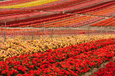 Flower Field — Stockfoto