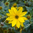 Stock Photo: Yellow flower.