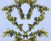 Дизайн с веток деревьев сливы в форме сердца. — Стоковое фото