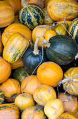 Big pile of different type of pumpkins. — Stock Photo