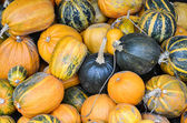 Big pile of different type of pumpkins. — Stockfoto