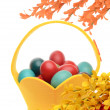 Stock Photo: Colorful hand dyed easter eggs in a yellow basket, decorations with spring flowers