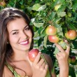 Woman picking a ripe apple from the tree. — Stock Photo