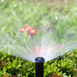 Sprinkler head watering the bush and grass — Stok fotoğraf #12199978