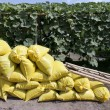 Stock Photo: Organic fertilizer bag in garden
