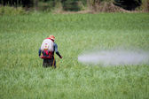 Farmer spraying pesticide on rice field — Stockfoto
