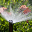 Sprinkler head watering the bush and grass — Foto de stock #12723908
