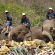 Elephant thai day in Chiangmai, Thailand. — Stock Photo