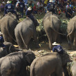 Elephant thai day in Chiangmai, Thailand. — Стоковое фото