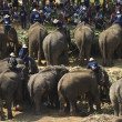 Elephant thai day in Chiangmai, Thailand. — Foto Stock