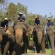 Elephant thai day in Chiangmai, Thailand. — Foto de Stock