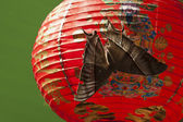 Butterfly on chinese lantern — Stock Photo