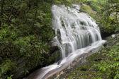 Cachoeira da floresta tropical — Fotografia Stock