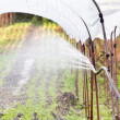 Watering seedlings vegetable in a greenhouse — Stock Photo