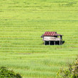 Hut in a terrace rice field - Stock Photo