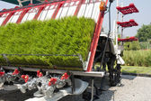Rice sprouts on planting machine — Stock Photo