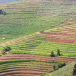 Terraced Vegetable Field — Stock Photo