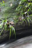 Plant with stream in tropical rainforest — Zdjęcie stockowe