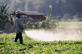 Farmer spraying pesticide on soy field — Stockfoto