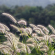 Flower grass in the wind — Stock Photo