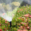 Stockfoto: Sprinkler head watering the bush and grass