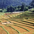 Terraced Rice Field after harvest — Stock Photo #16208011