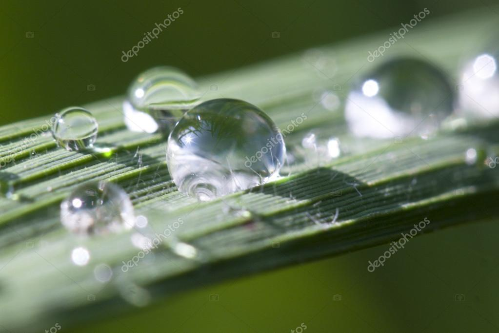 Macro green leaf with drops in rice field  — Stock Photo #16243285