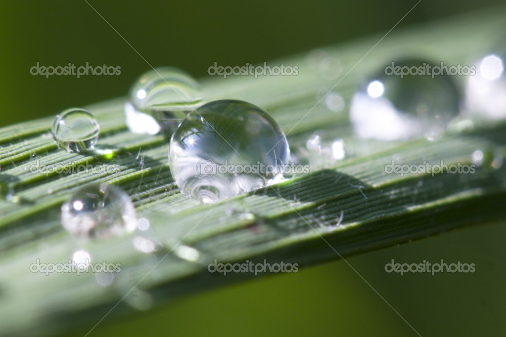 Macro green leaf with drops in rice field   Stock Photo #16243285