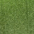 Artificial Grass Field Texture — Stockfoto #16609229