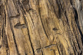 Artifiacial trä textur — Stockfoto