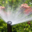 Stock Photo: Sprinkler head watering the bush and grass
