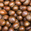 Chinese Chestnut - Stock Photo